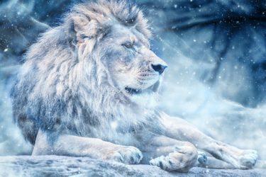 『LION MEDIA』『LION BLOG』関連の記事をまとめました。