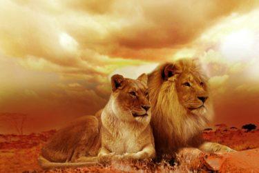 『LION MEDIA』と『LION BLOG』の画像サイズを調べたよ