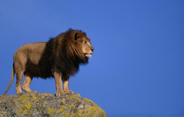 『LION MEDIA』カスタマイズ【SEO設定】の使い方:初心者向け