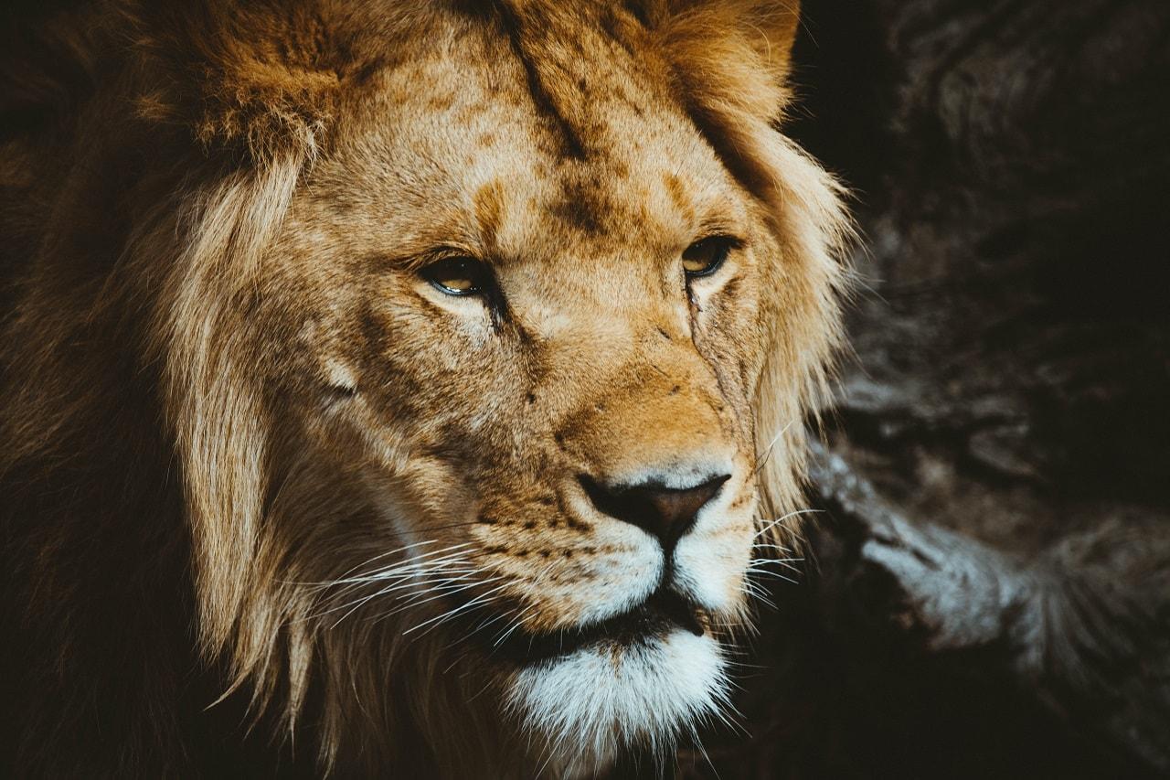 『LION MEDIA』基本設定