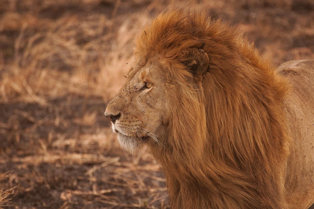 『LION MEDIA』投稿ページ設定