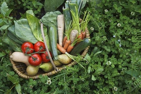 野菜を育てるイメージ